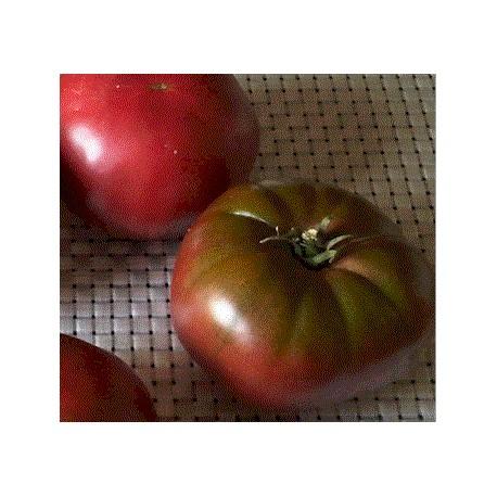 Tomate Noire de Crimée