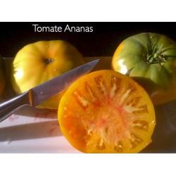 Tomato Ananas (Pineapple)