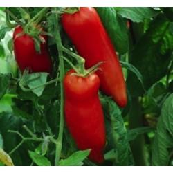 Tomate CORNUE DES ANDES