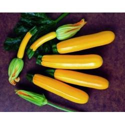 Zucchini seeds Orelia F1